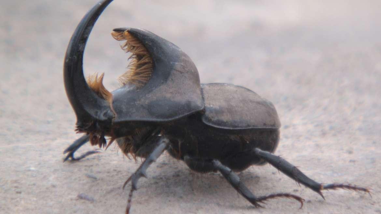 Insectos de Suelo